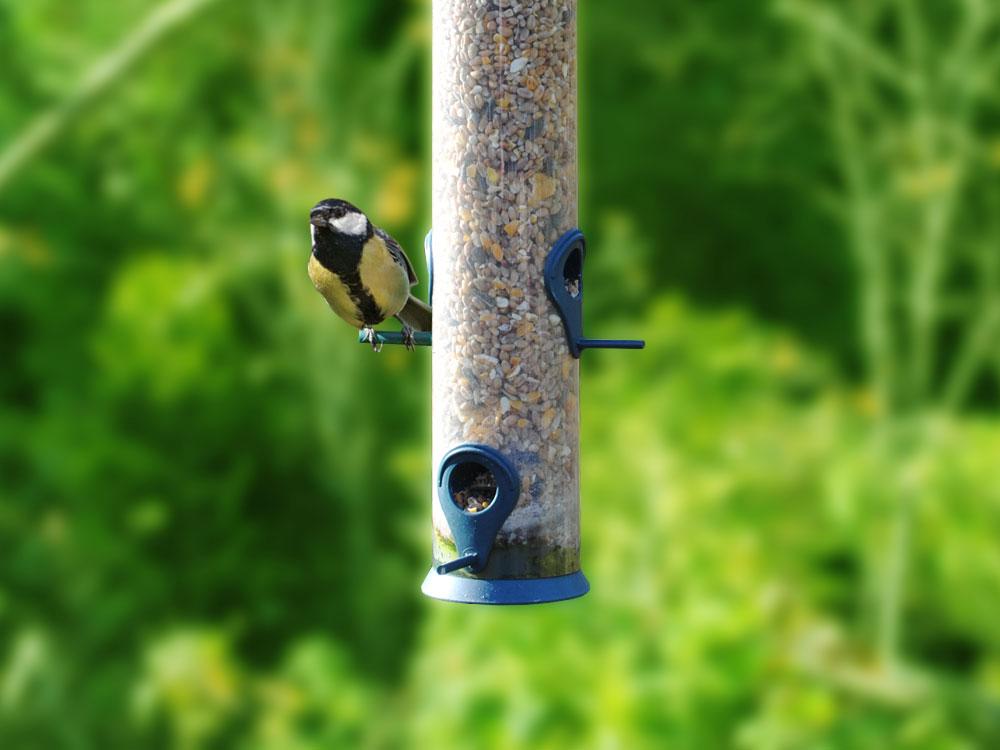 Bird care